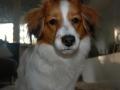 Aldo mit sechs Monaten