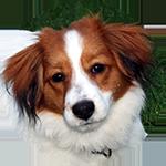 Aldo vom Hundebusch